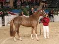 IMG_1022 Danessa VA - Reserve Champion (Holsteiner Gala Abend 2014)