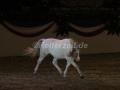 IMG_1042 Kerstin Brein u. ihre 5 kleinen Ponys - Freiheitsdressur (Holsteiner Gala Abend 2014)