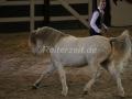 IMG_1044 Kerstin Brein u. ihre 5 kleine Ponys - Freiheitsdressur (Holsteiner Gala Abend 2014)