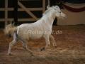 IMG_1045 Kerstin Brein u. ihre 5 kleinen Ponys - Freiheitsdressur (Holsteiner Gala Abend 2014)