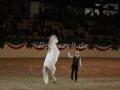 IMG_1046 Kerstin Brein u. ihre 5 kleinen Ponys - Freiheitsdressur (Holsteiner Gala Abend 2014)