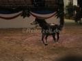 IMG_1055 Kerstin Brein u. ihre 5 kleinen Ponys - Freiheitsdressur (Holsteiner Gala Abend 2014)