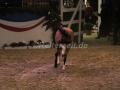 IMG_1056 Kerstin Brein u. ihre 5 kleinen Ponys - Freiheitsdressur (Holsteiner Gala Abend 2014)