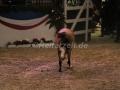 IMG_1057 Kerstin Brein u. ihre 5 kleinen Ponys - Freiheitsdressur (Holsteiner Gala Abend 2014)
