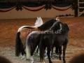 IMG_1059 Kerstin Brein u. ihre 5 kleinen Ponys - Freiheitsdressur (Holsteiner Gala Abend 2014)