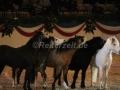 IMG_1062 Kerstin Brein u. ihre 5 kleinen Ponys - Freiheitsdressur (Holsteiner Gala Abend 2014)