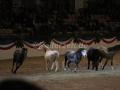 IMG_1066 Kerstin Brein u. ihre 5 kleinen Ponys - Freiheitsdressur (Holsteiner Gala Abend 2014)