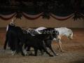 IMG_1067 Kerstin Brein u. ihre 5 kleinen Ponys - Freiheitsdressur (Holsteiner Gala Abend 2014)