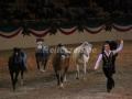 IMG_1070 Kerstin Brein u. ihre 5 kleinen Ponys - Freiheitsdressur (Holsteiner Gala Abend 2014)