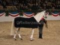IMG_1099 Corrado - 29 Jahre alt (Holsteiner Gala Abend 2014)