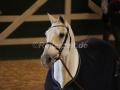 IMG_1123 Corrado - 29 Jahre alt (Holsteiner Gala Abend 2014)
