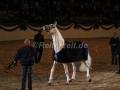 IMG_1127 Corrado - 29 Jahre alt (Holsteiner Gala Abend 2014)
