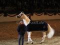 IMG_1128 Corrado - 29 Jahre alt (Holsteiner Gala Abend 2014)