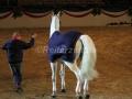 IMG_1132 Corrado - 29 Jahre alt (Holsteiner Gala Abend 2014)