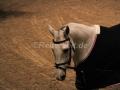 IMG_1138 Corradina (Holsteiner Gala Abend 2014)