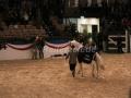 IMG_1141 Corradina (Holsteiner Gala Abend 2014)
