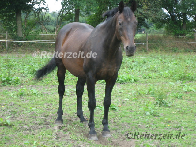 älteres Pferd