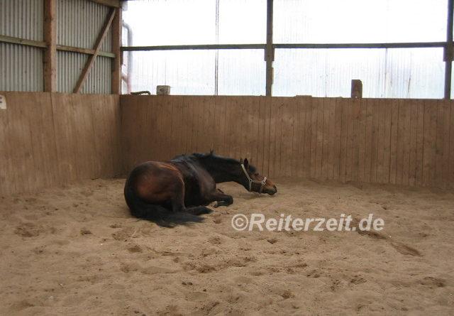Pferd beim wälzen
