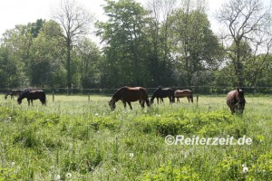 IMG_1059 Pferdeherde