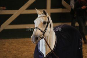 IMG_1123 Corrado 29 Jahre alt (Holsteiner Gala Abend 2014)