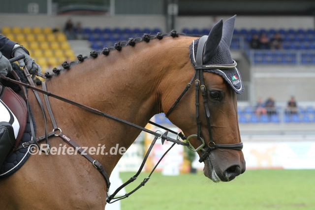 IMG_1430 Pferd m. Martingal