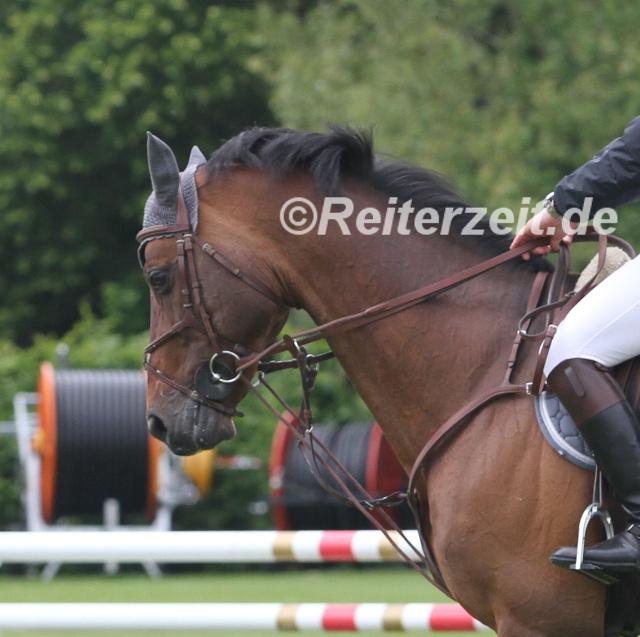 IMG_3173 Pferd m. Schlaufzügeln