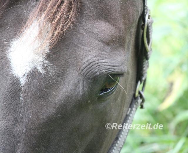IMG_3659 Augenfalten Pferd