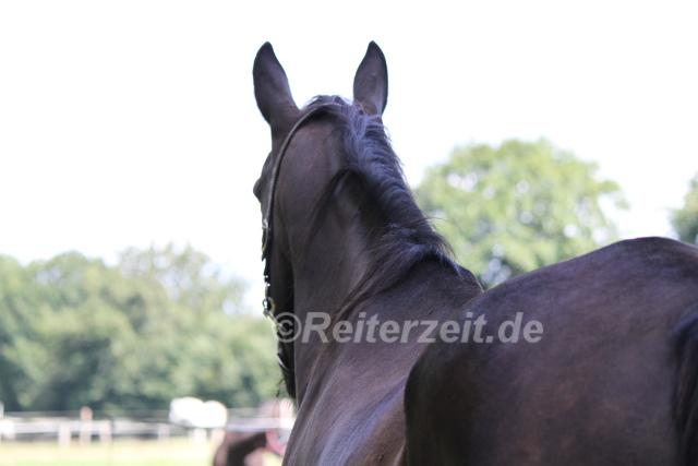 IMG_3706 Pferderücken
