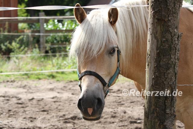 IMG_3858 Körpersprache Pferd