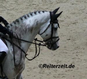 Pferd mit Martingal