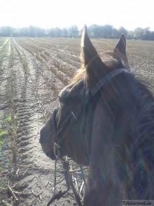 Pferd im Gelände